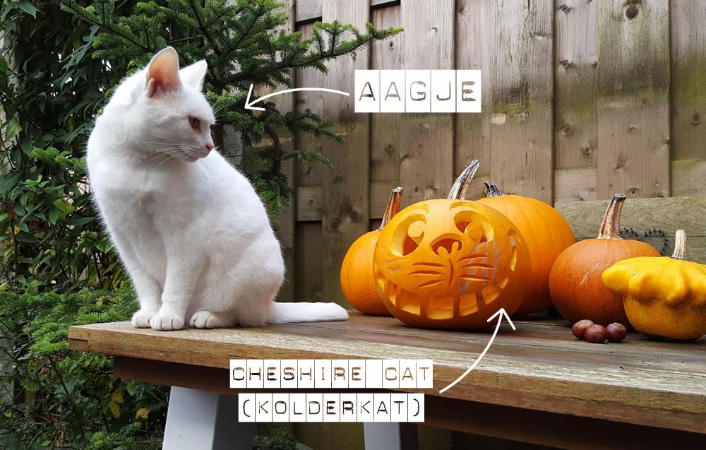 Zo te zien is Aagje de kat niet heel erg onder de indruk van de Cheshire Cat pompoen.