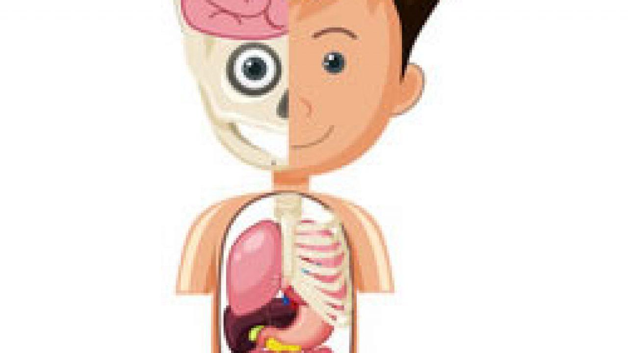 Uitgelezene Kleurplaat van het menselijk lichaam printen GH-79