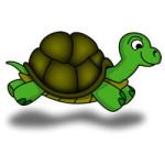 Schildpadden kleurplaat