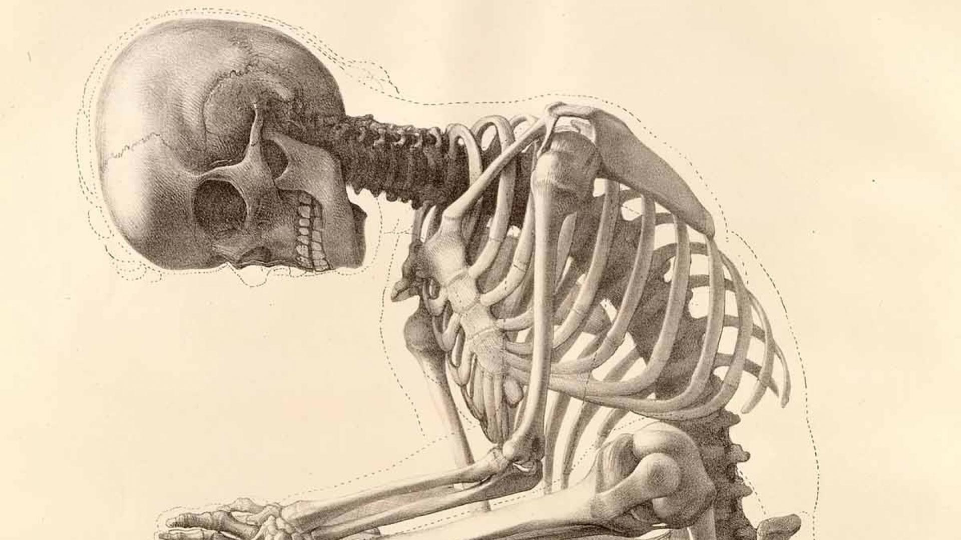 leuk voor anatomie skelet
