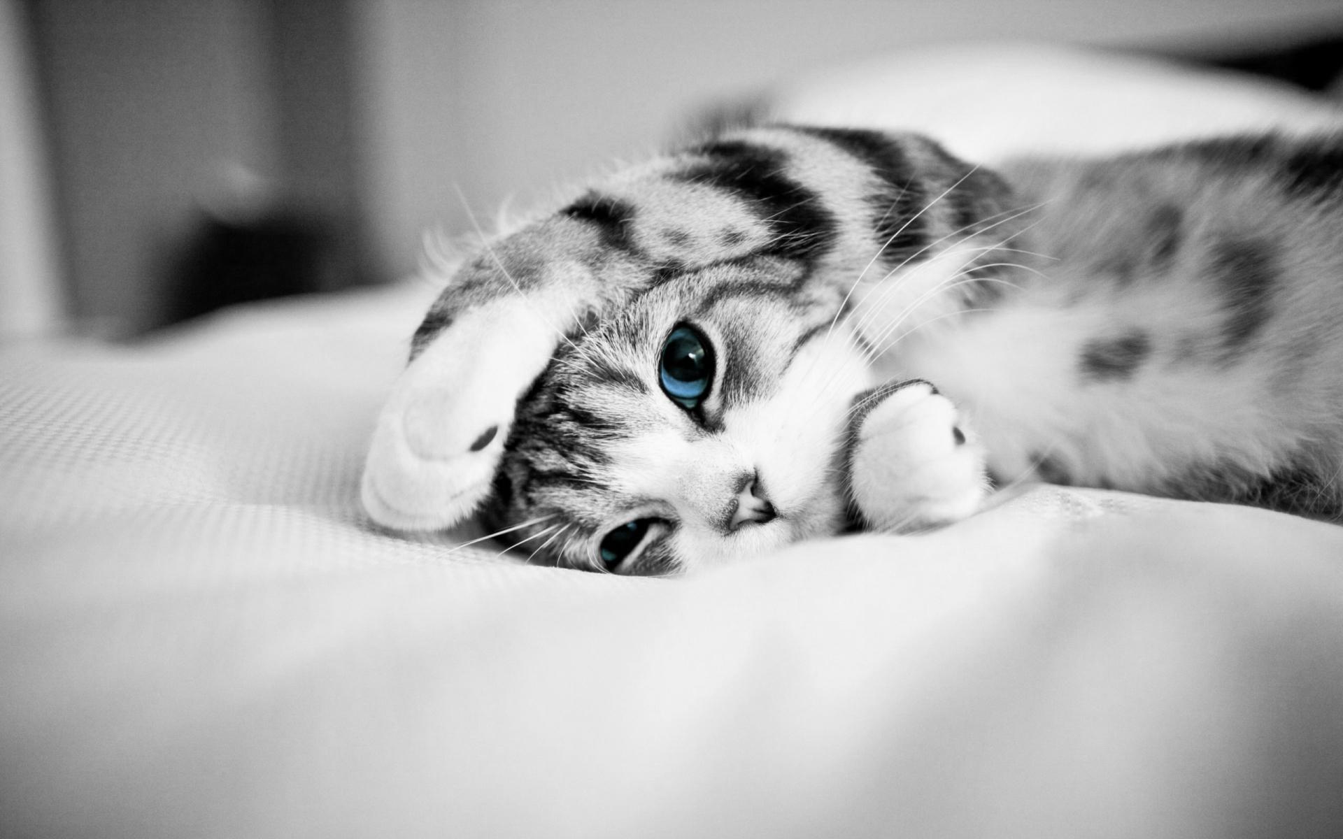 download wallpaper: katje met blauwe ogen wallpaper