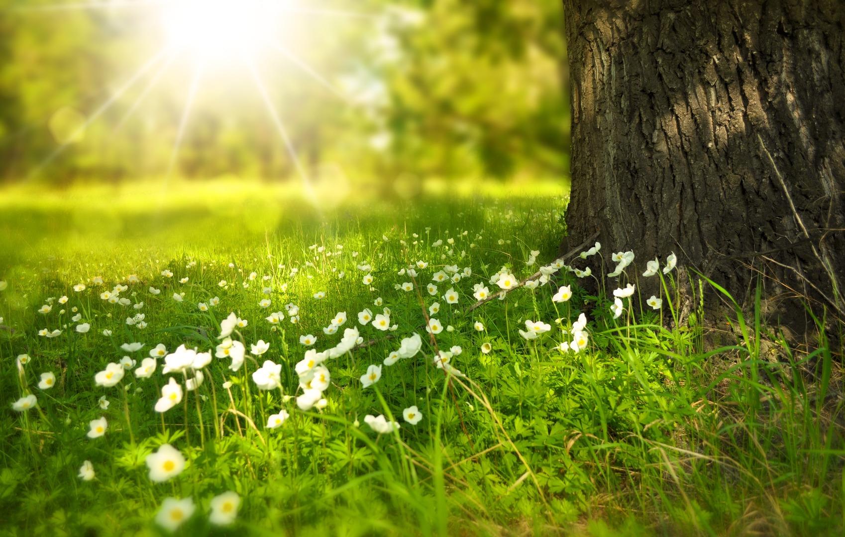download wallpaper: bloemetjes in het bos wallpaper