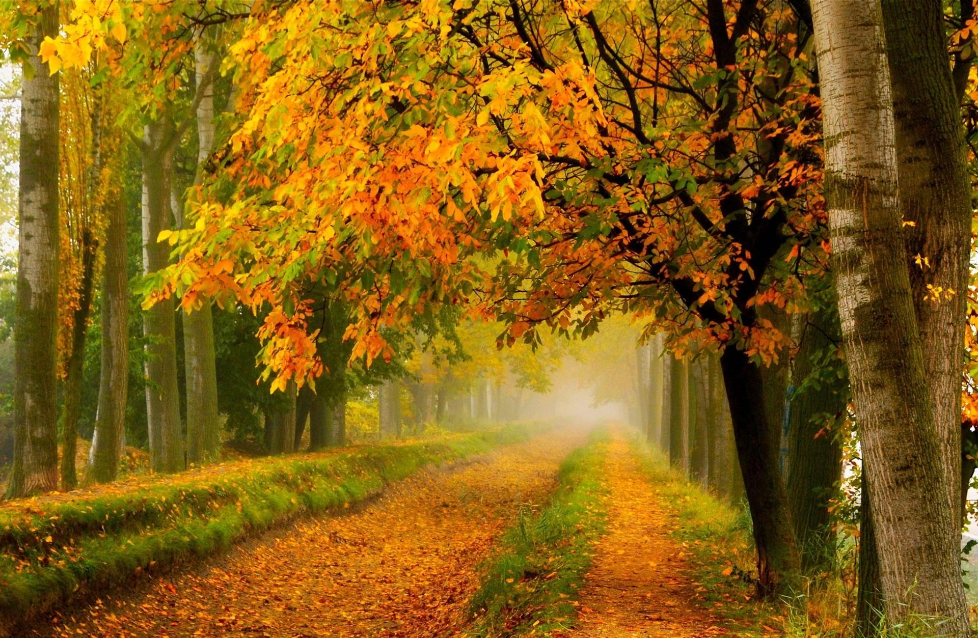 bekijk wallpaper: herfstbos met vallende bladeren kleurplaat