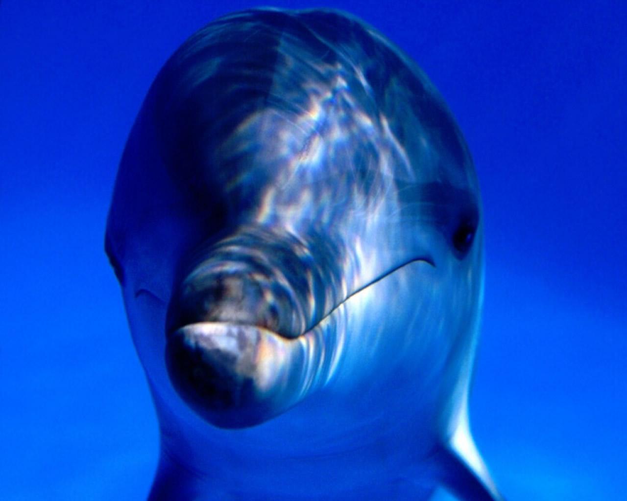 download wallpaper: een dolfijn in zee wallpaper