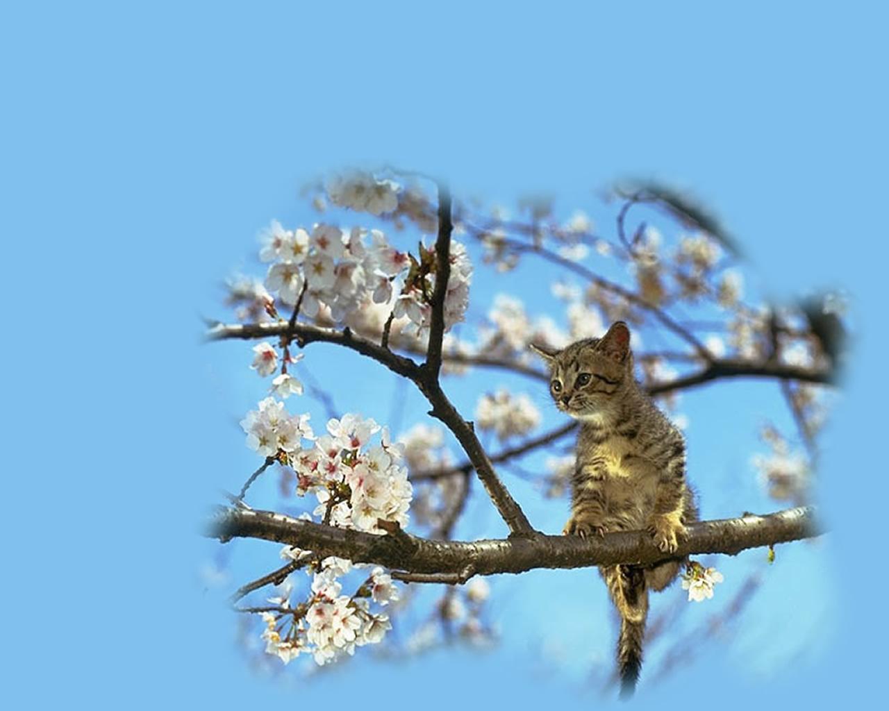 download wallpaper: een poesje in een boom in bloei wallpaper