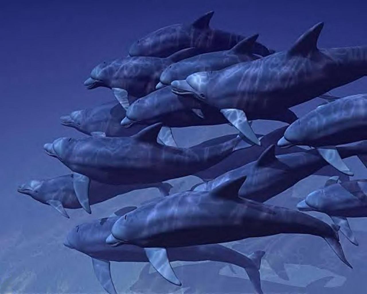 download wallpaper: een school dolfijnen wallpaper