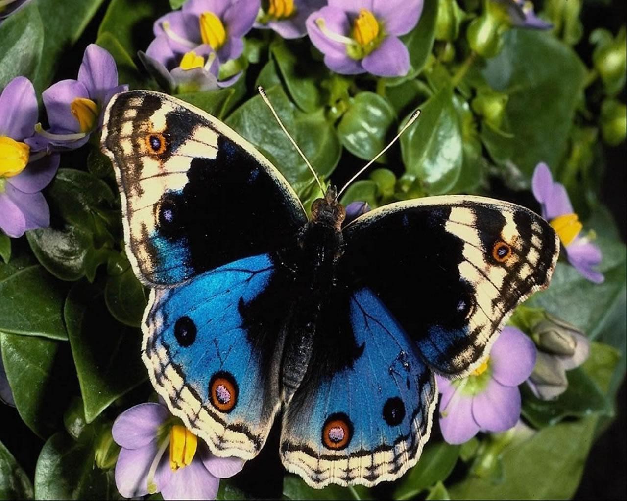 download wallpaper: een vlinder op een bloem wallpaper