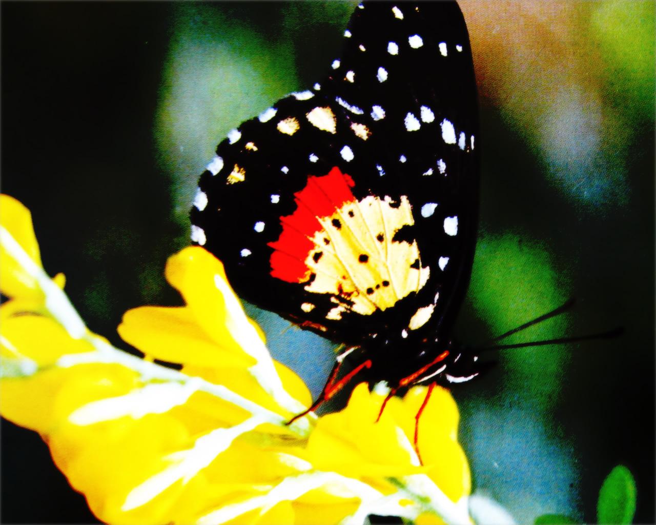 download wallpaper: een vlinder zit op een bloem wallpaper