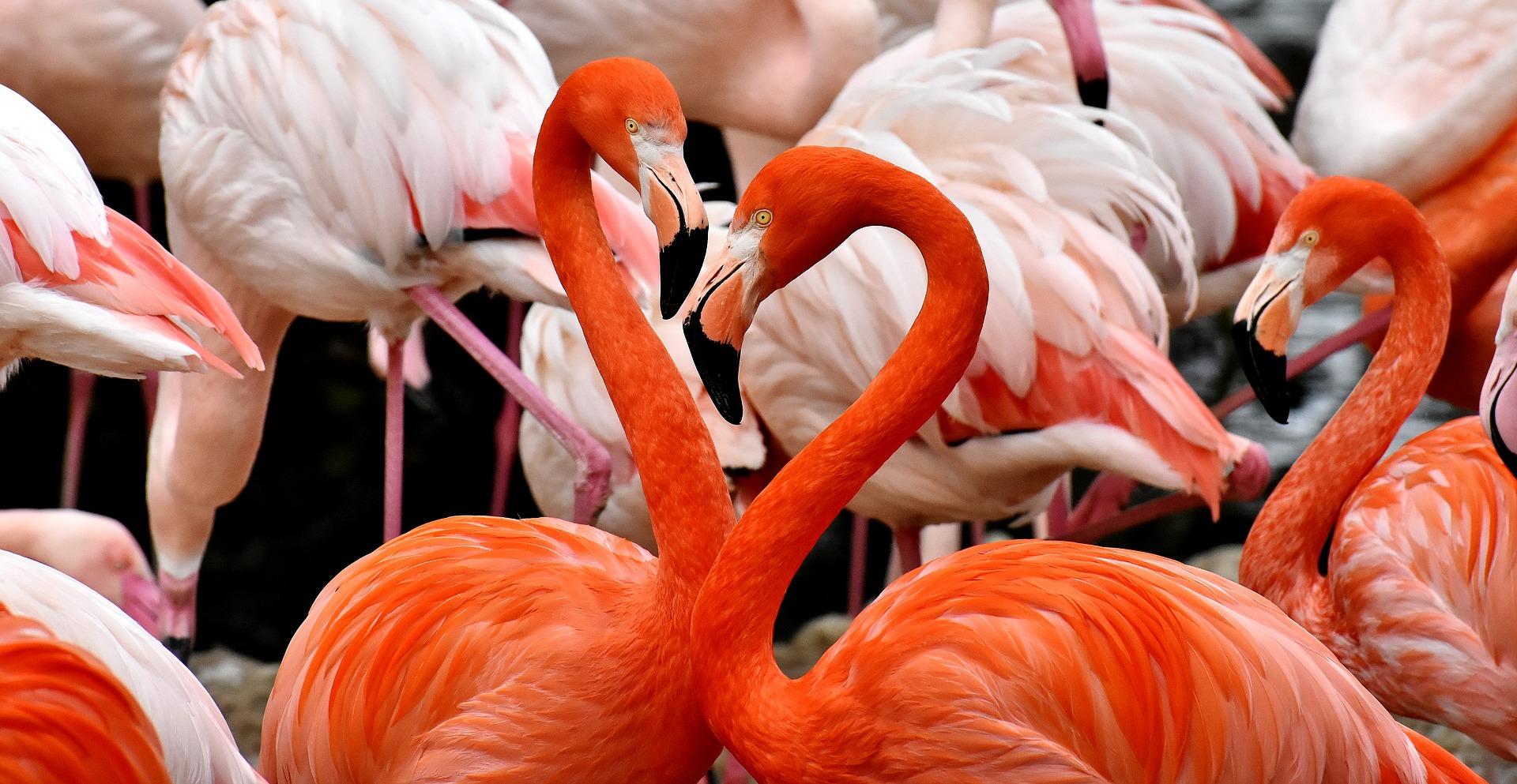 download wallpaper: flamingos wallpaper