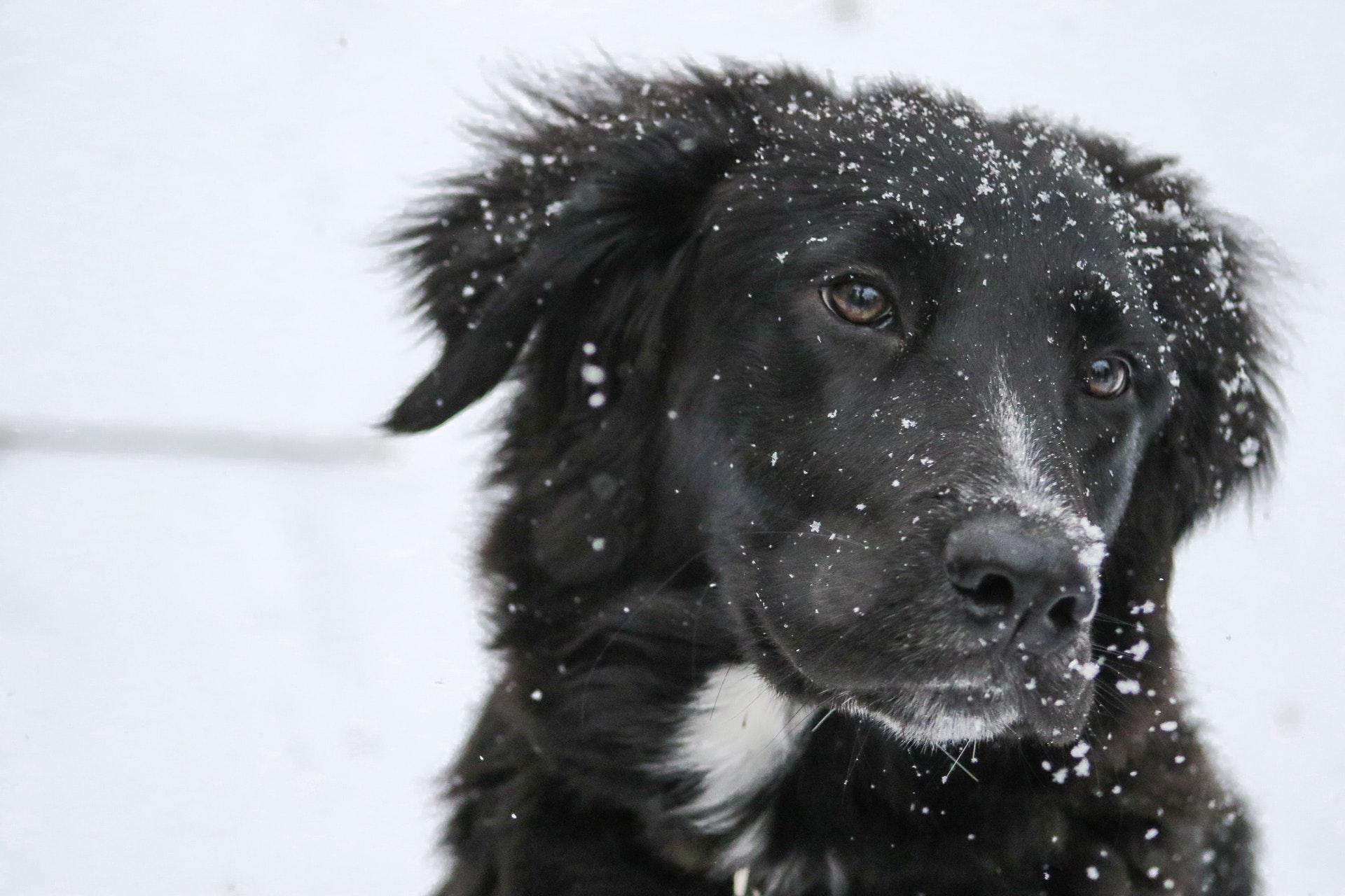 download wallpaper: hond in de sneeuw wallpaper