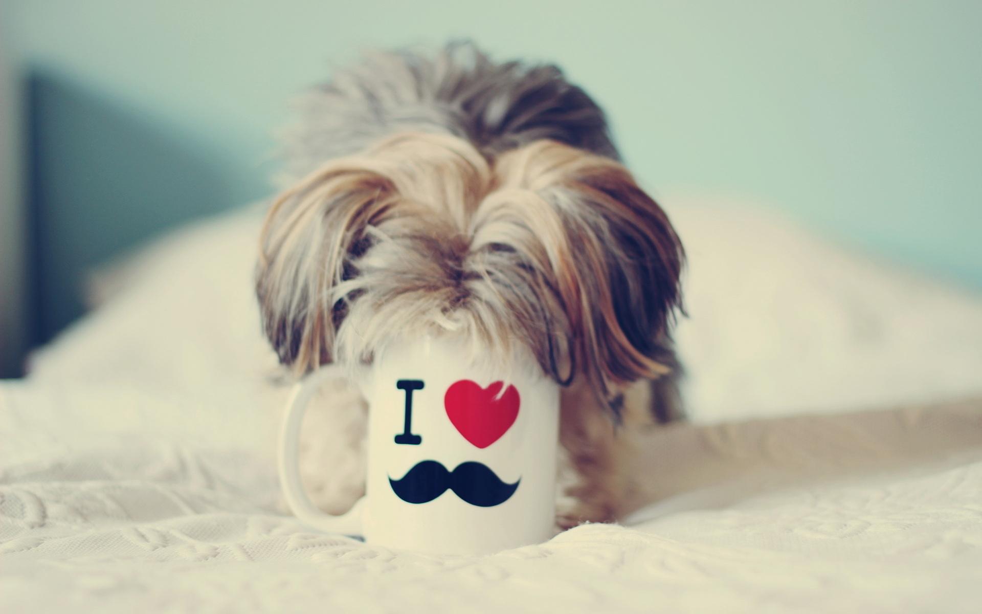 download wallpaper: hondje met kop in mok wallpaper