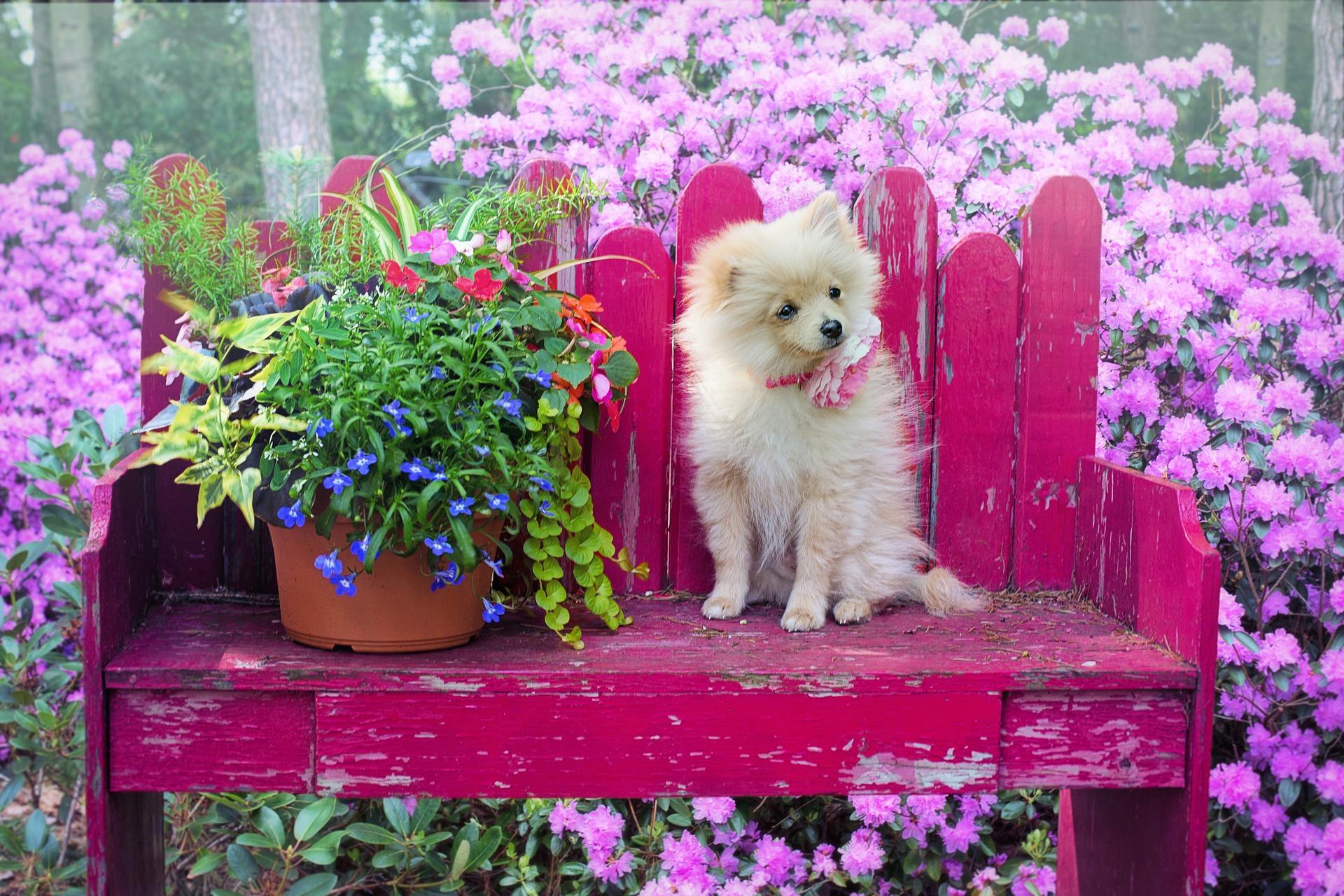 download wallpaper: hondje tussen de bloemen wallpaper