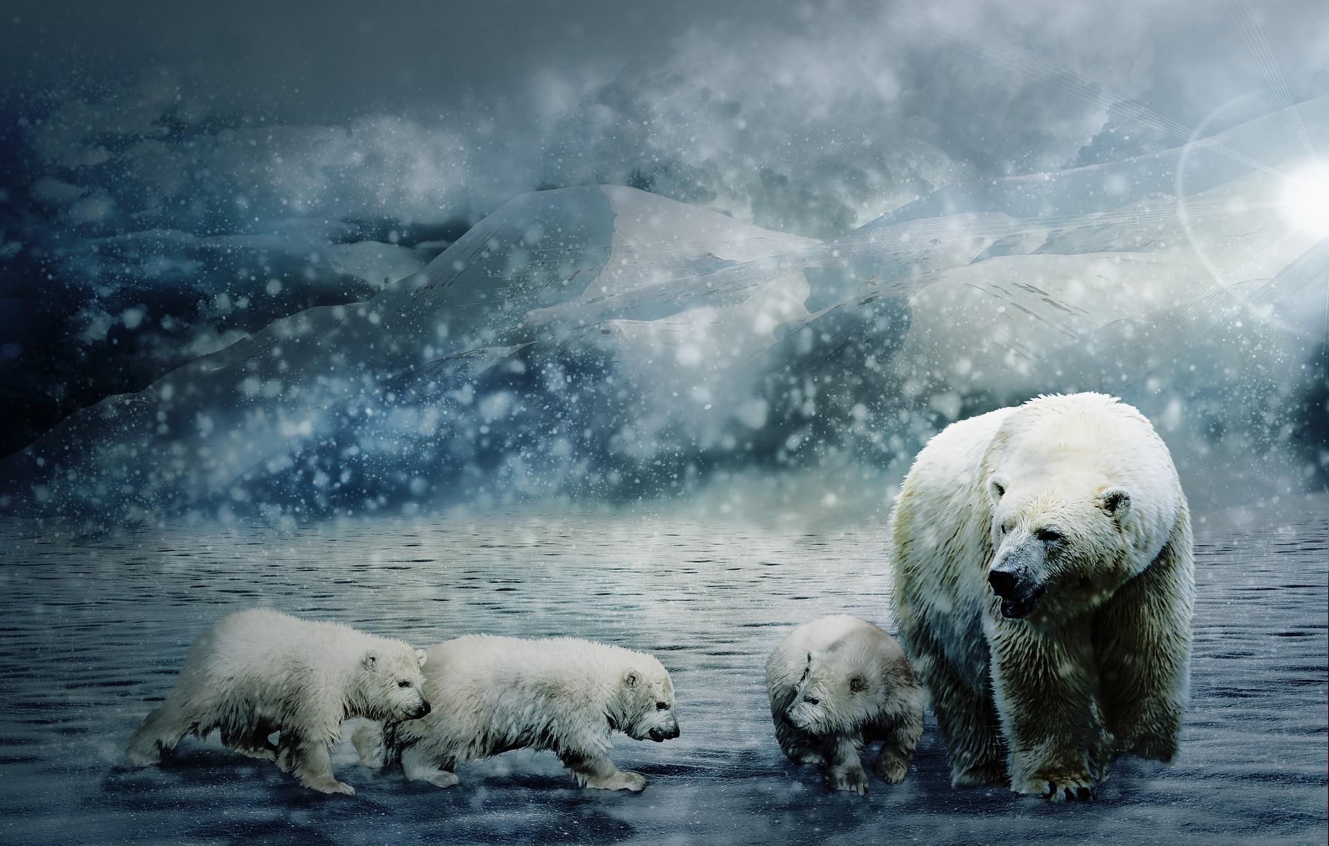 download wallpaper: ijsbeer met cubs wallpaper