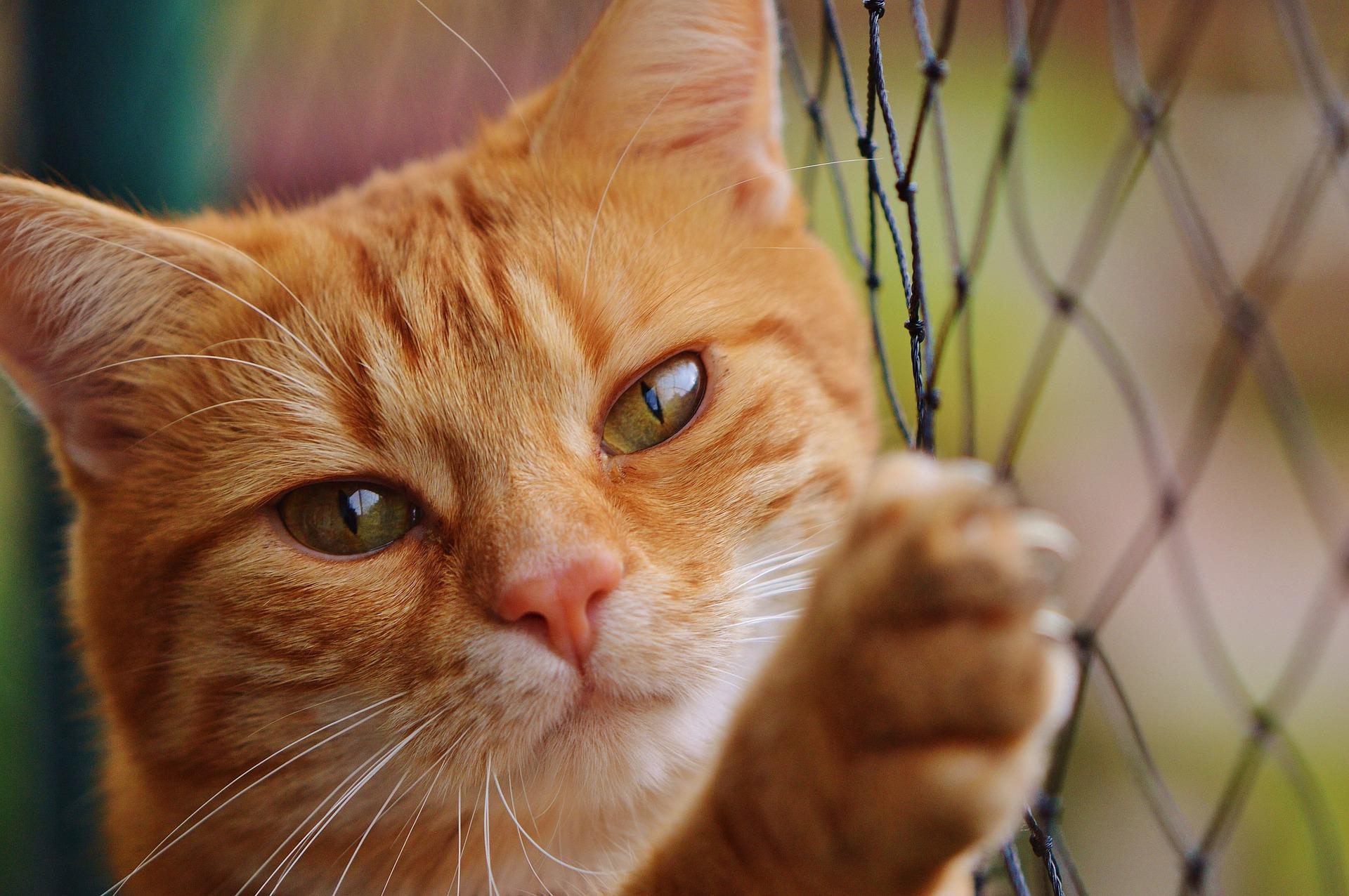 download Wallpaper: kat bij een hek wallpaper