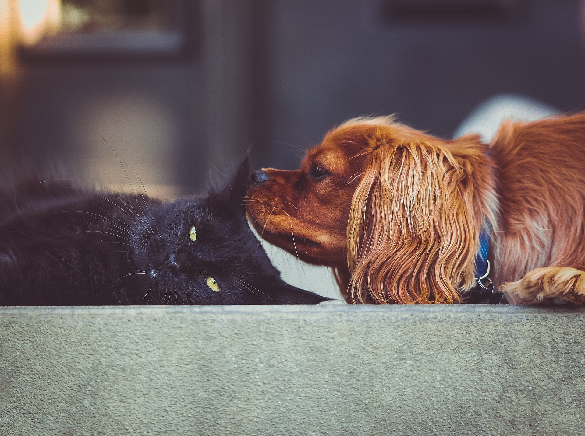 download Wallpaper: kat en hond wallpaper