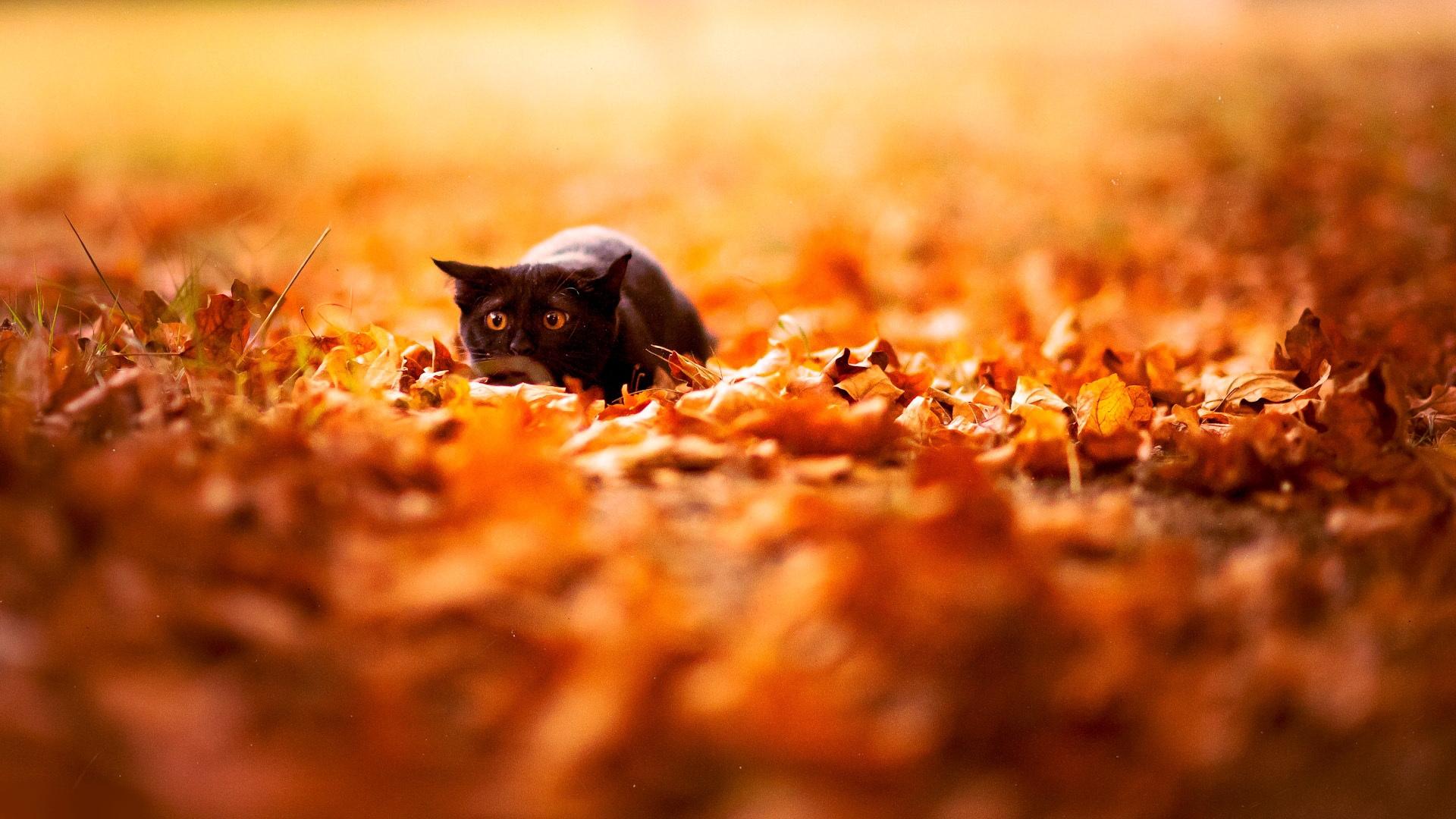 download wallpaper: een kat in een herfstbos wallpaper