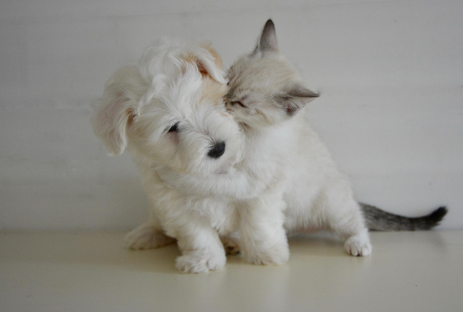 download wallpaper: katje geeft hond een kusje wallpaper