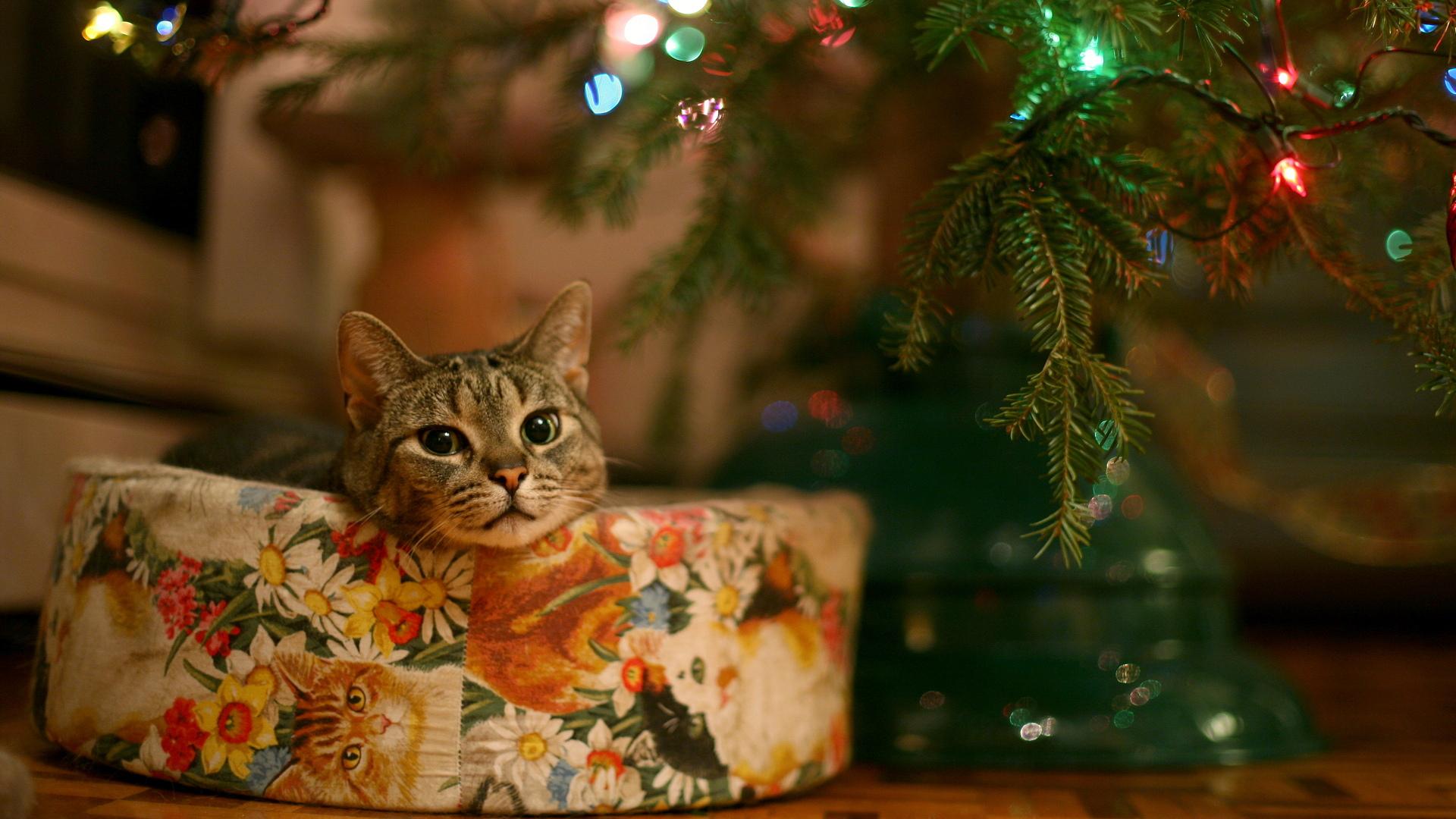 download wallpaper: kat onder de kerstboom wallpaper