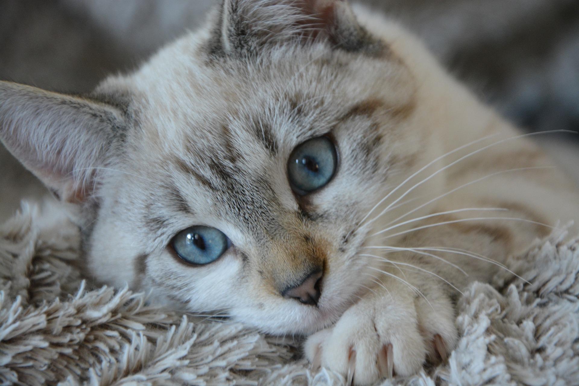 download wallpaper: kat op een kleed wallpaper