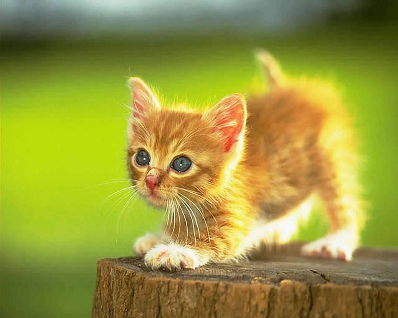 download wallpaper: katje op een boomstronk wallpaper