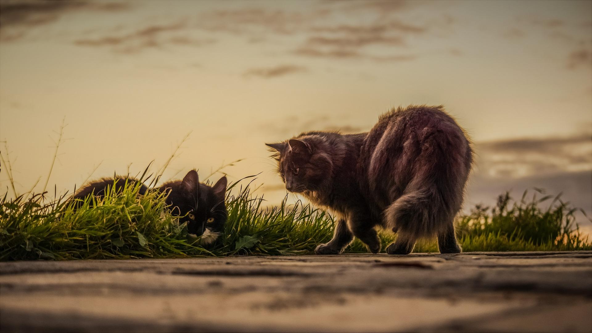 download wallpaper: katten langs de weg wallpaper