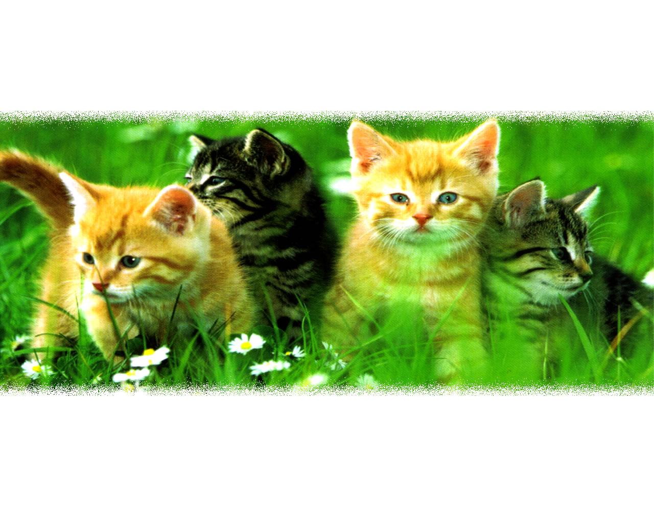 download wallpaper: katten zitten in het gras wallpaper
