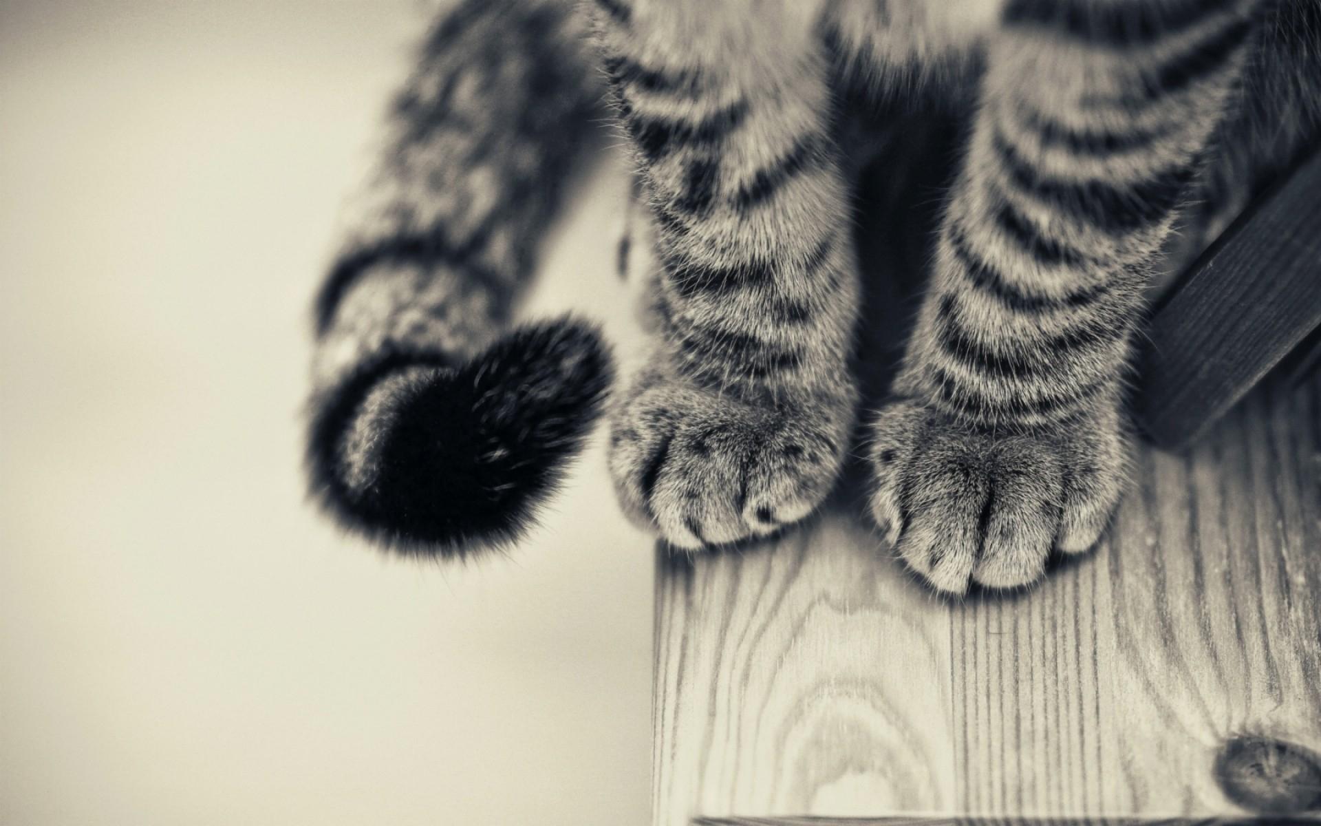 download wallpaper: kattenpootjes wallpaper