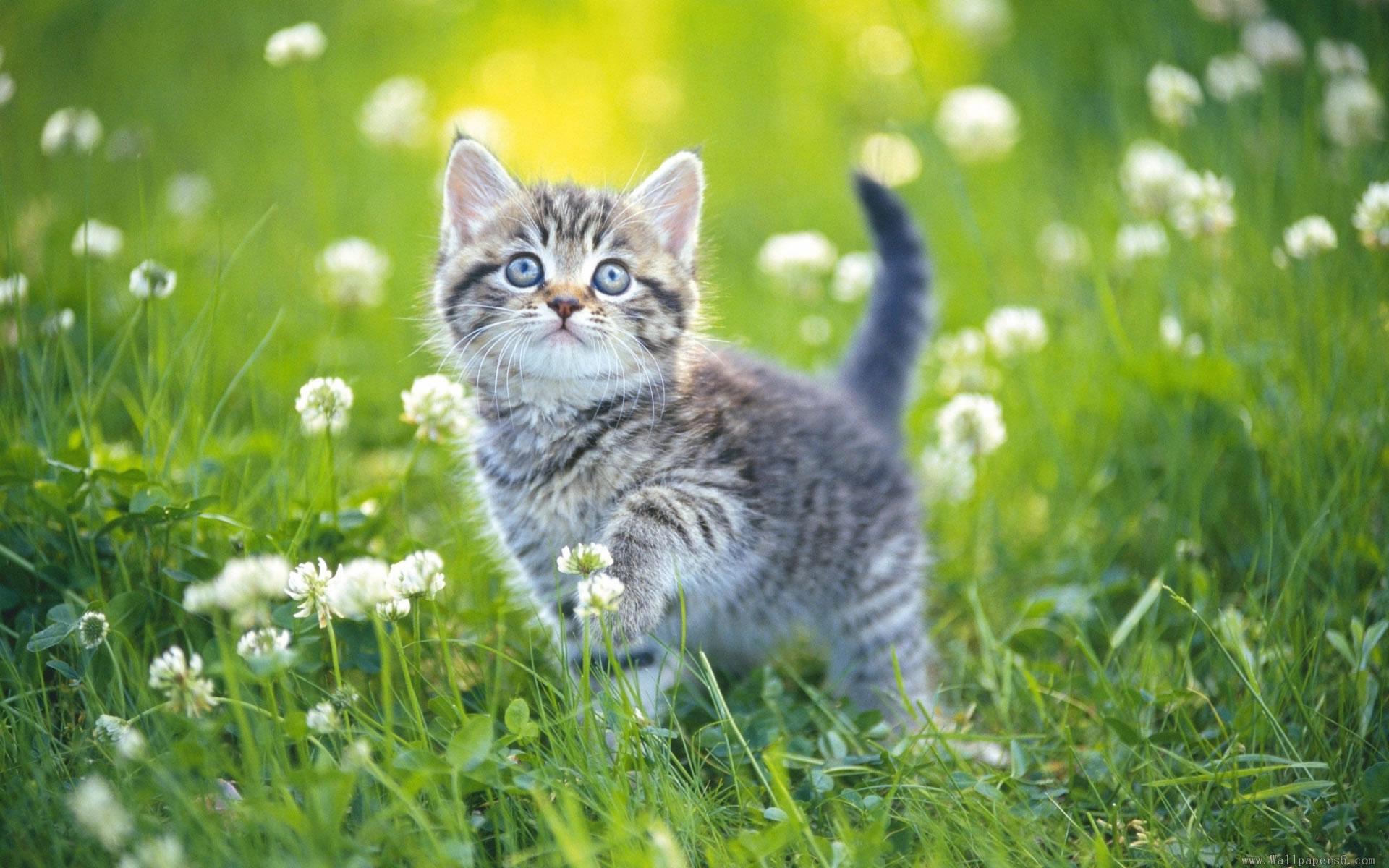 download wallpaper: kitten in het gras wallpaper