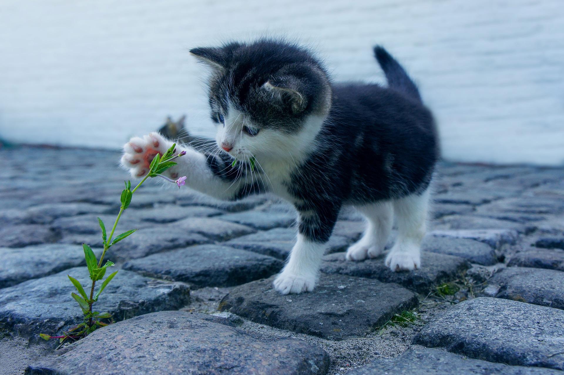 download wallpaper: kitten met een bloem wallpaper