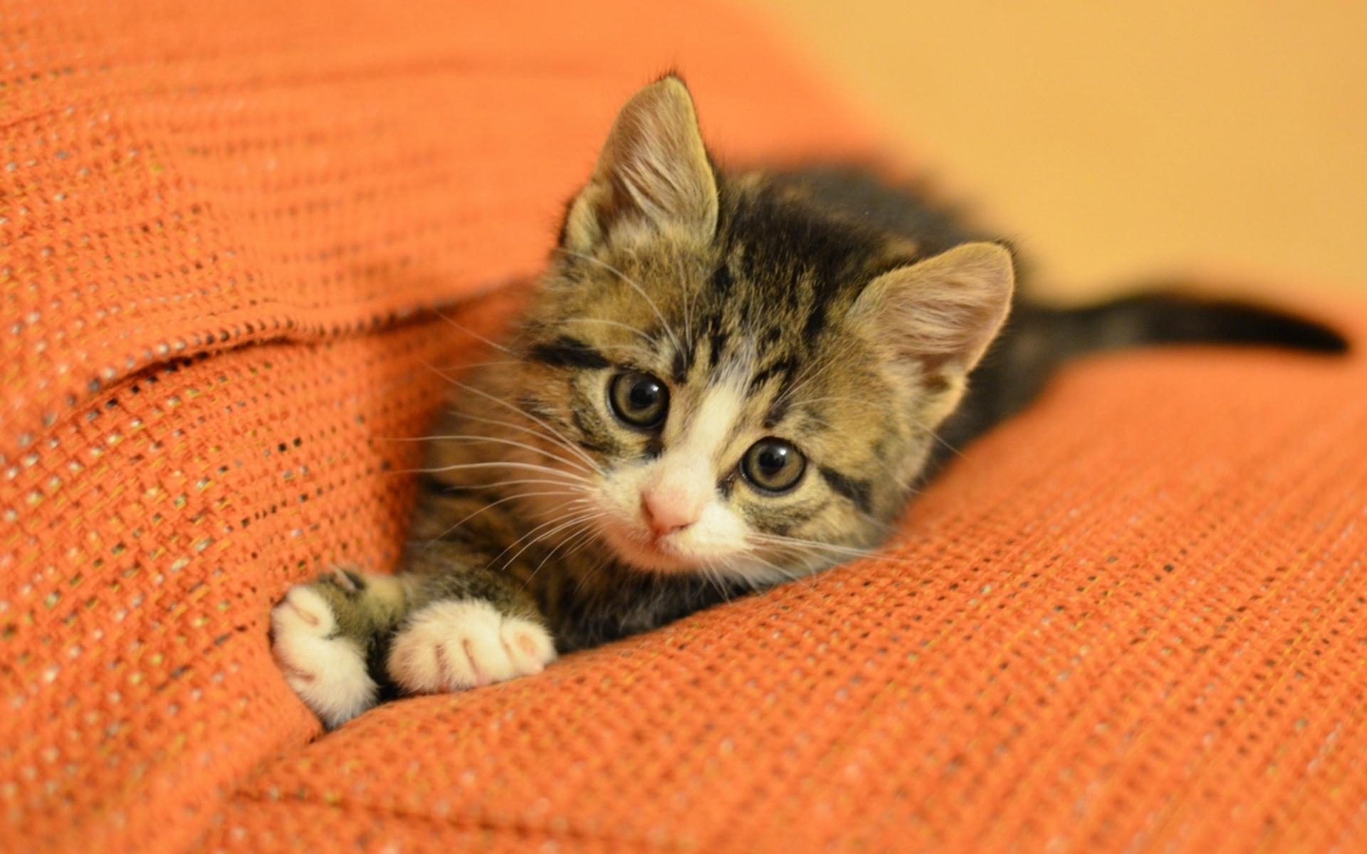 download wallpaper: kitten op de bank wallpaper