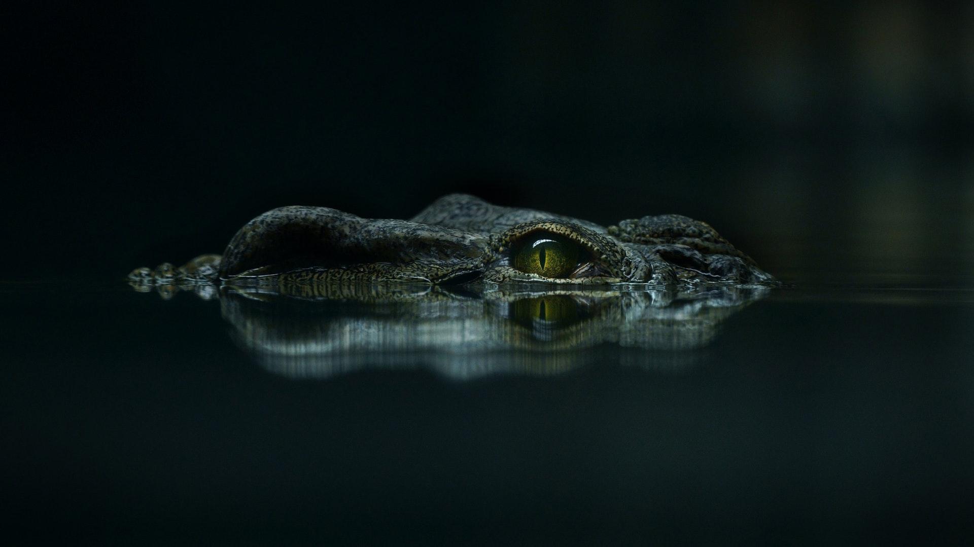 download wallpaper: krokodil wallpaper