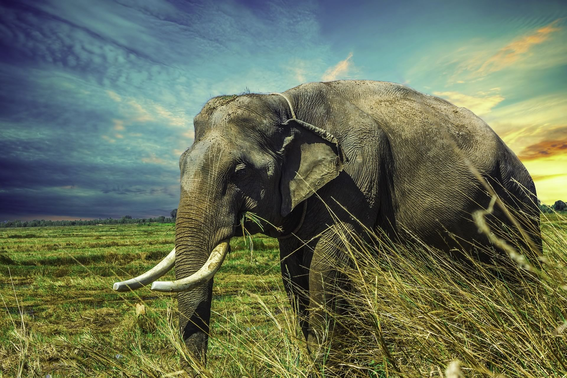 download wallpaper: olifant wallpaper