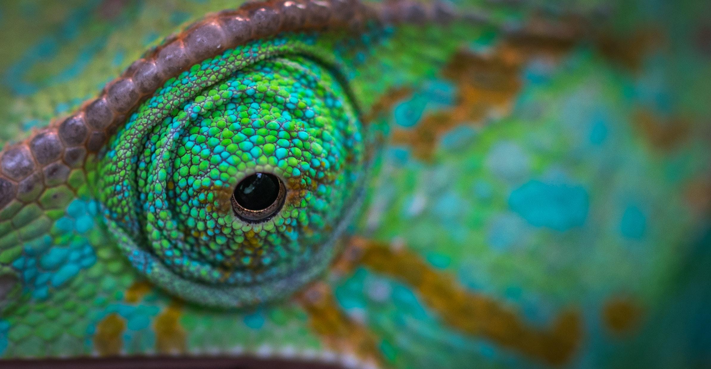 download wallpaper: oog van de kameleon wallpaper