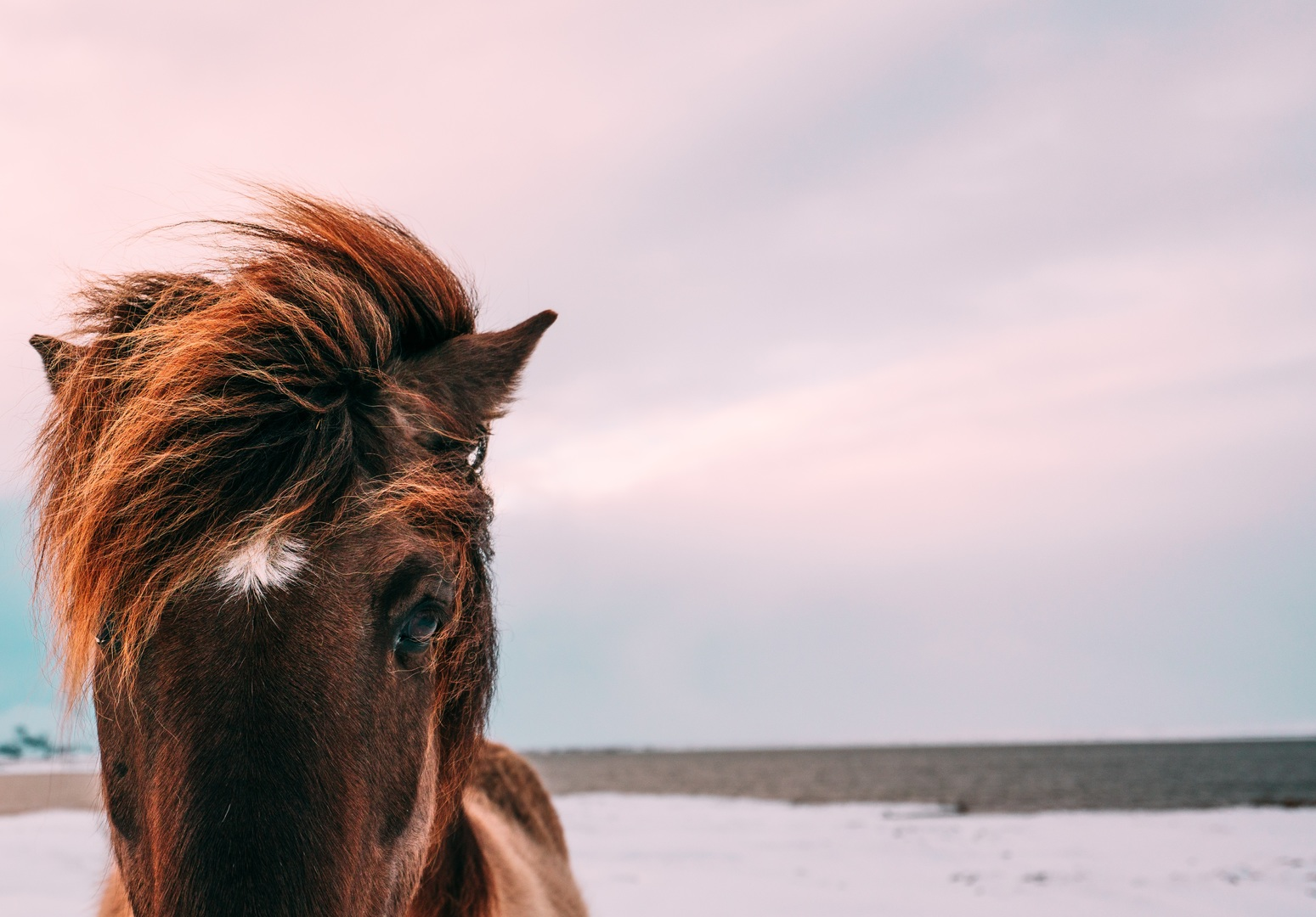 download wallpaper: paard aan het strand wallpaper