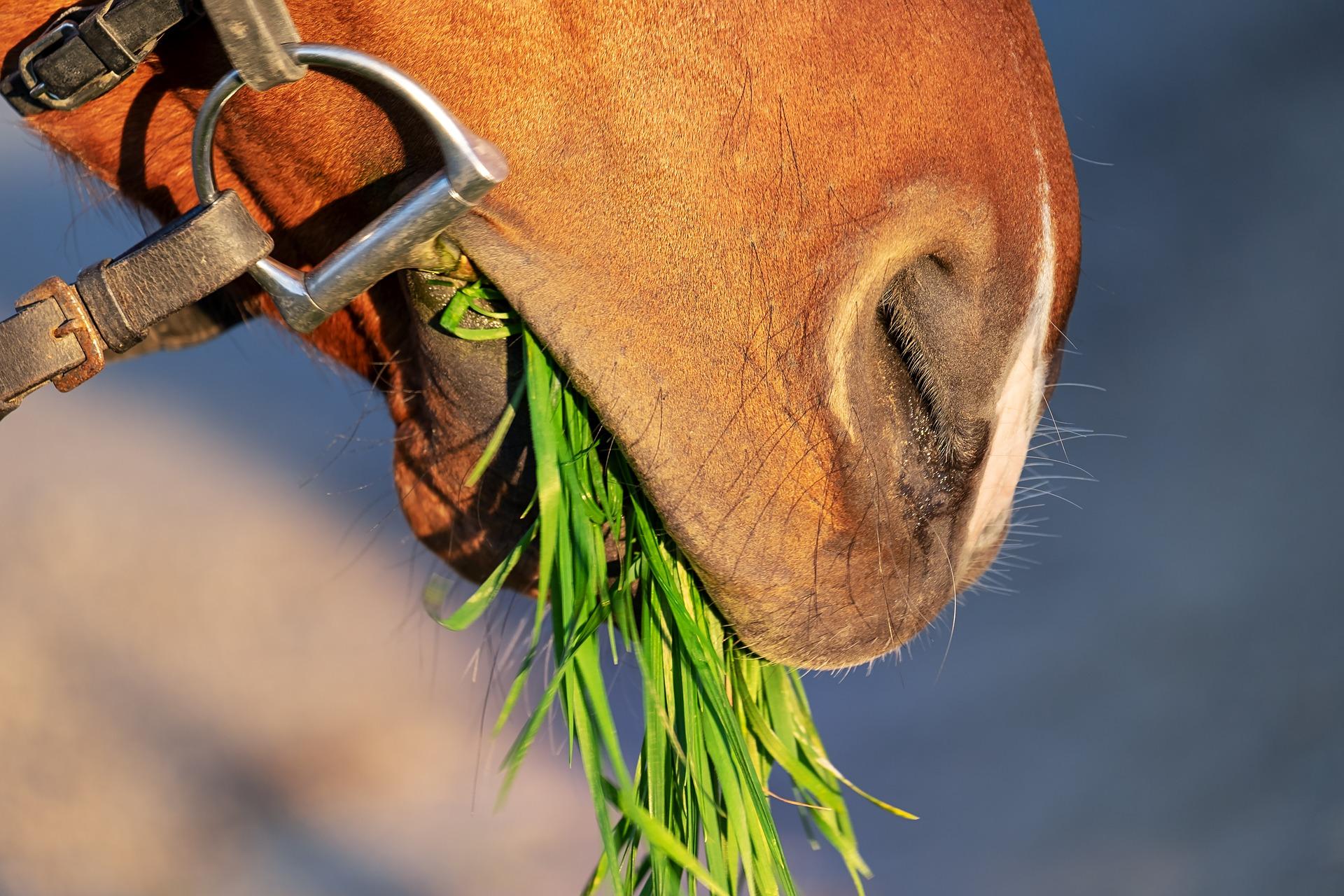 download wallpaper: paard eet gras wallpaper