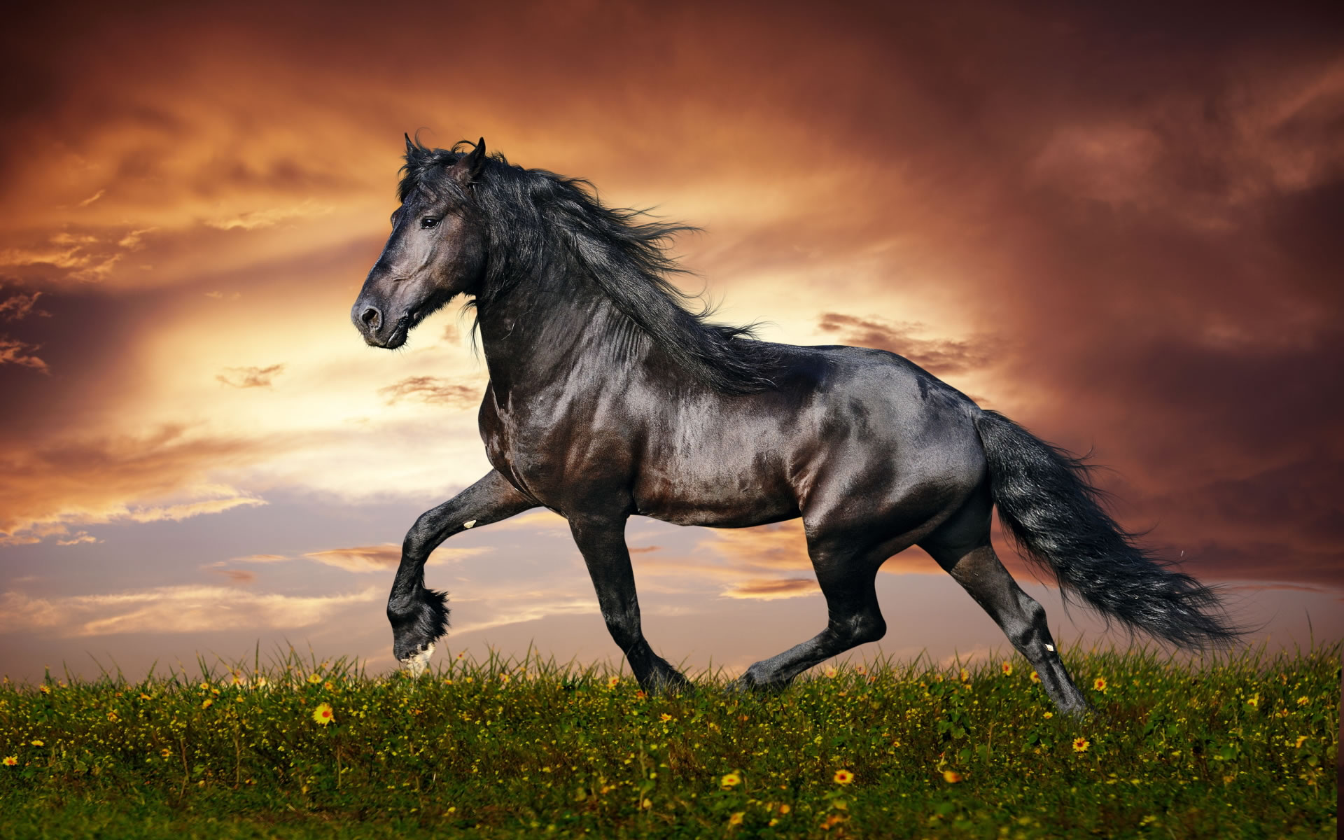 download wallpaper: paard in het veld wallpaper