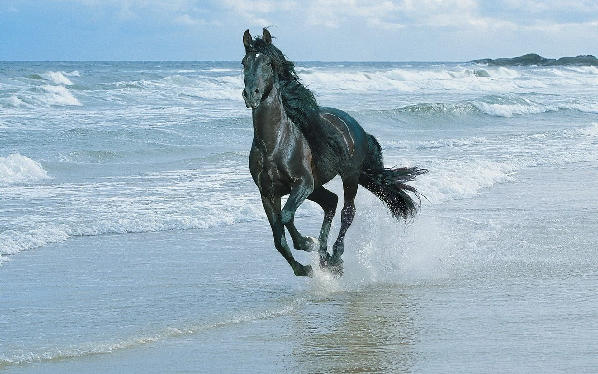 download wallpaper: paard op het strand wallpaper