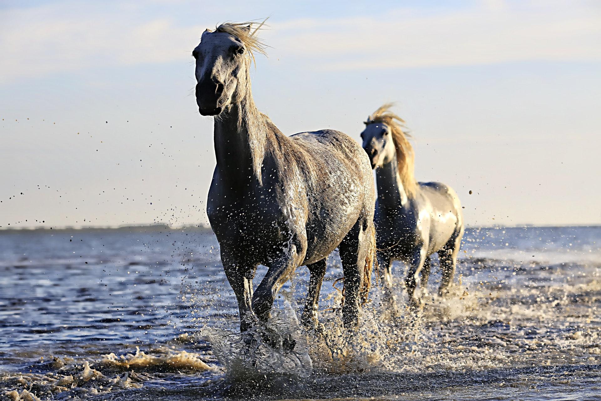 download wallpaper: paarden aan het strand wallpaper