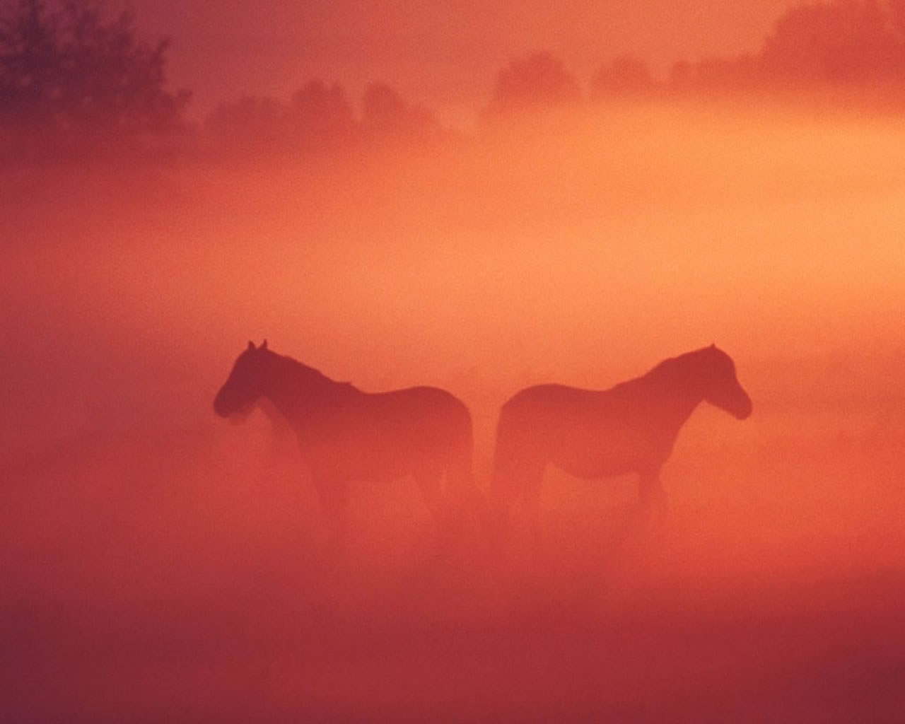 download wallpaper: paarden in de mist wallpaper