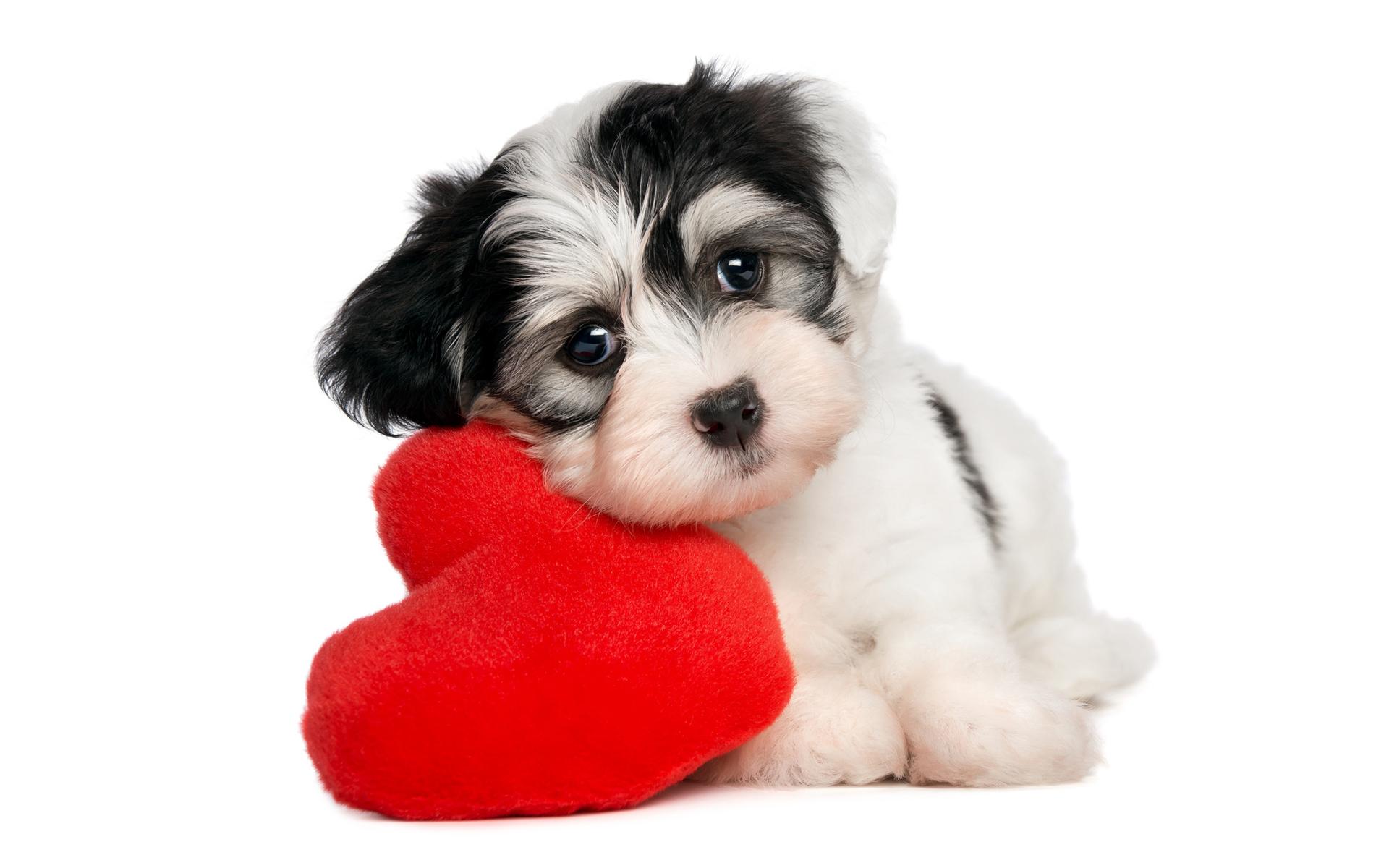 download wallpaper: puppie love wallpaper