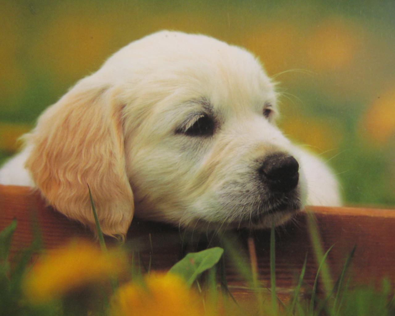 download wallpaper: puppy in de tuin wallpaper