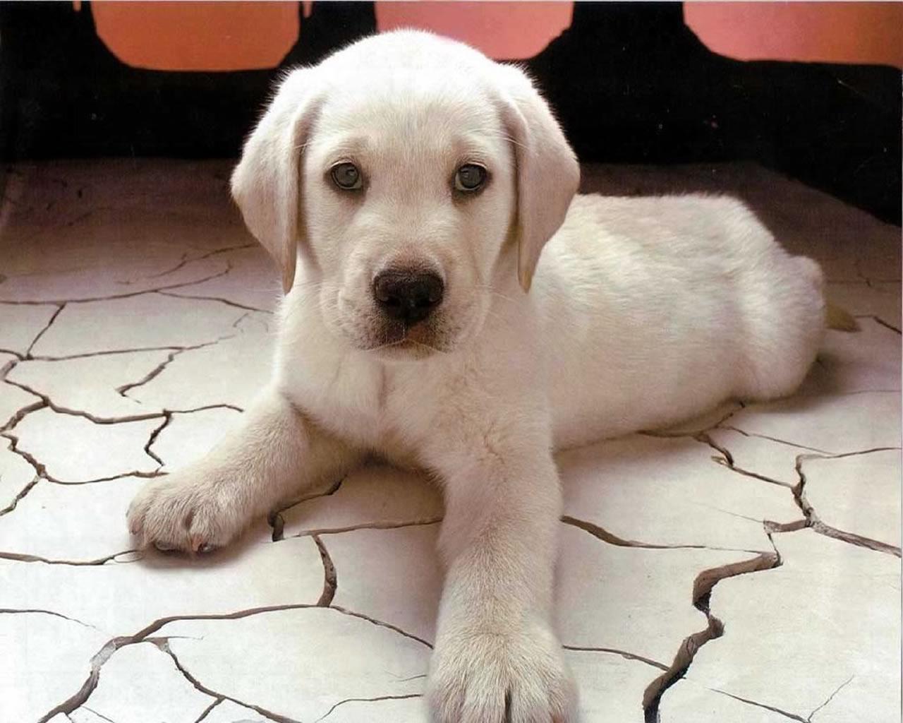 download wallpaper: puppy wallpaper
