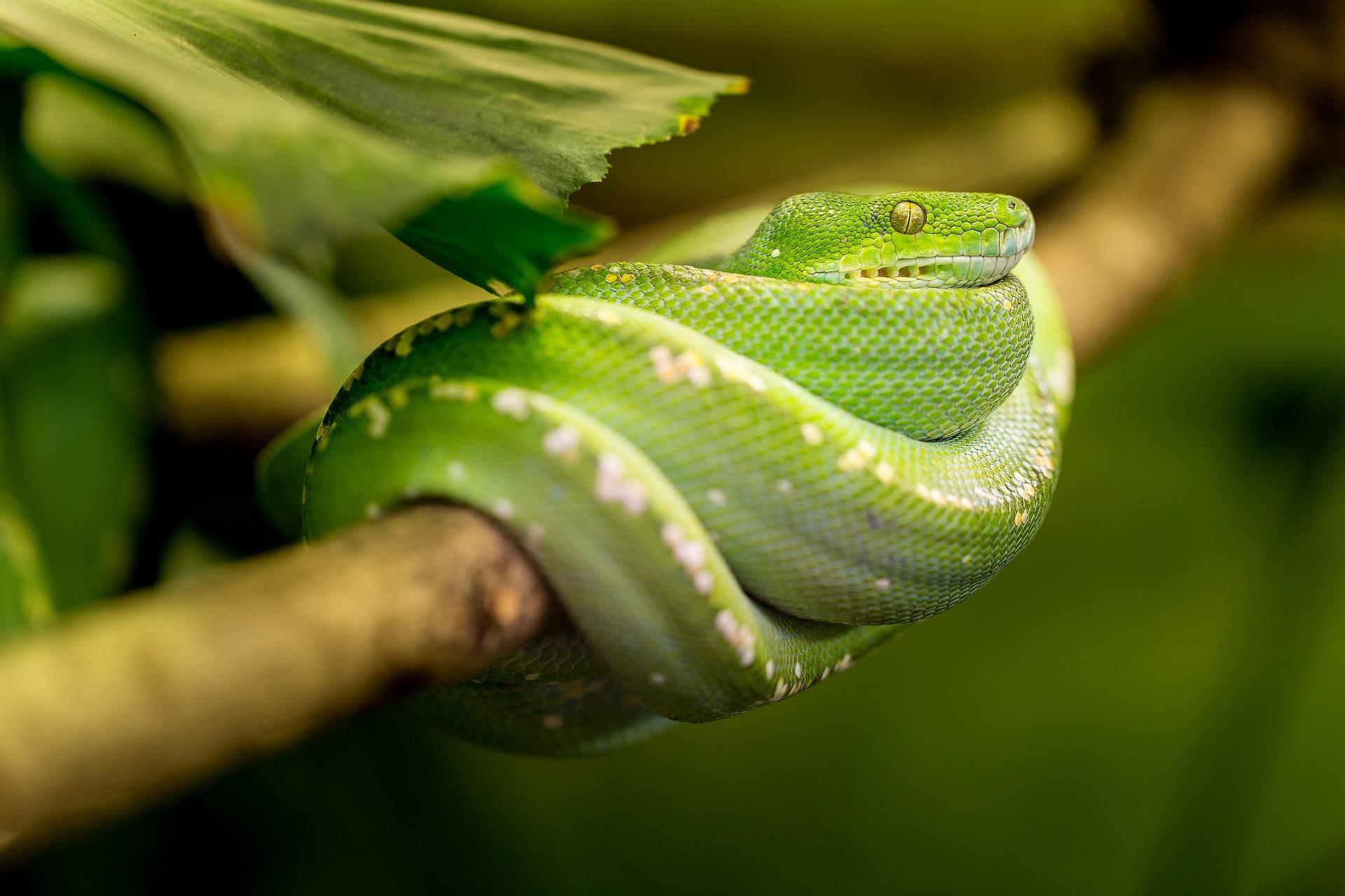 download wallpaper: Python in een boom wallpaper