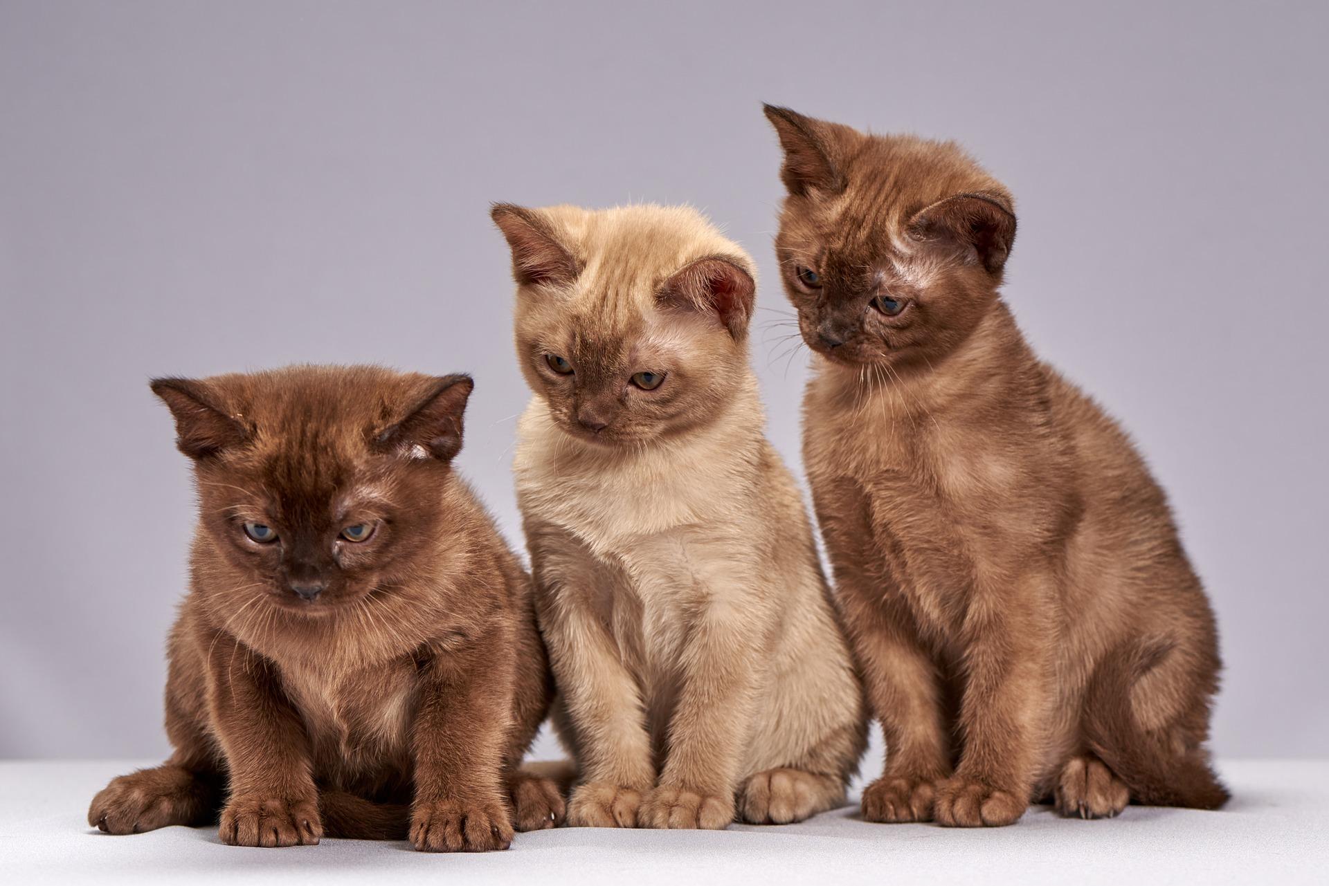 download wallpaper: schattige kittens wallpaper