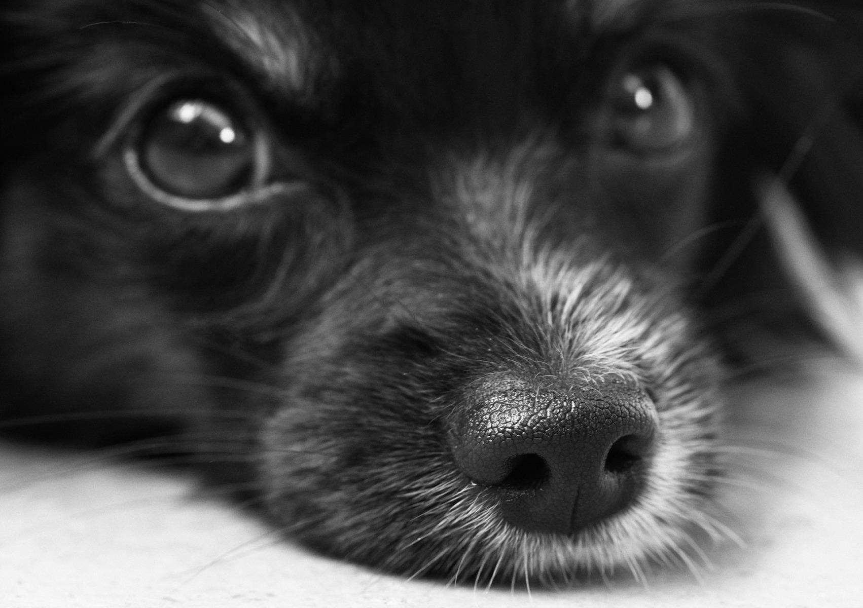 download wallpaper: schattige puppie wallpaper