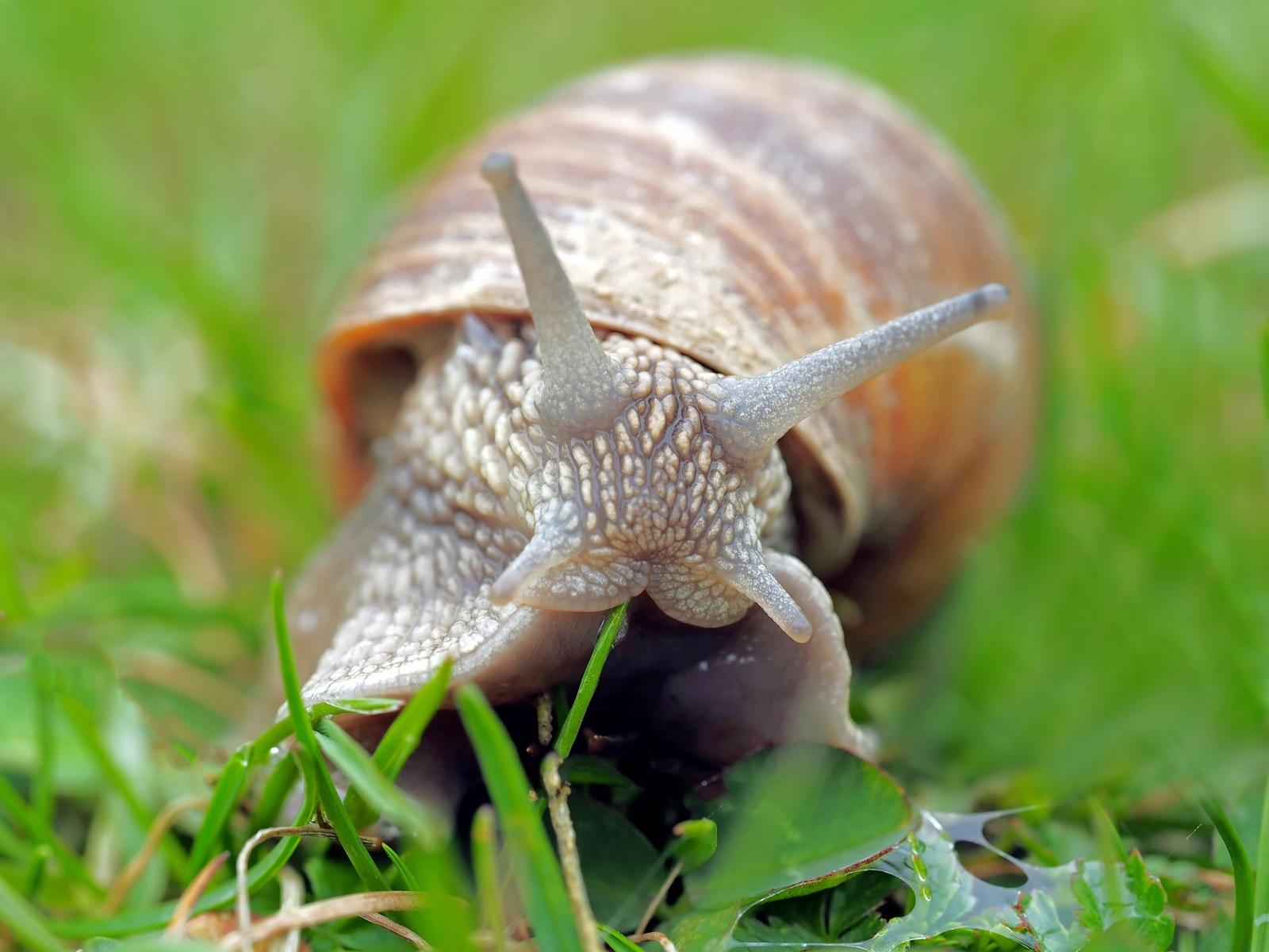 download wallpaper: slak in het gras wallpaper