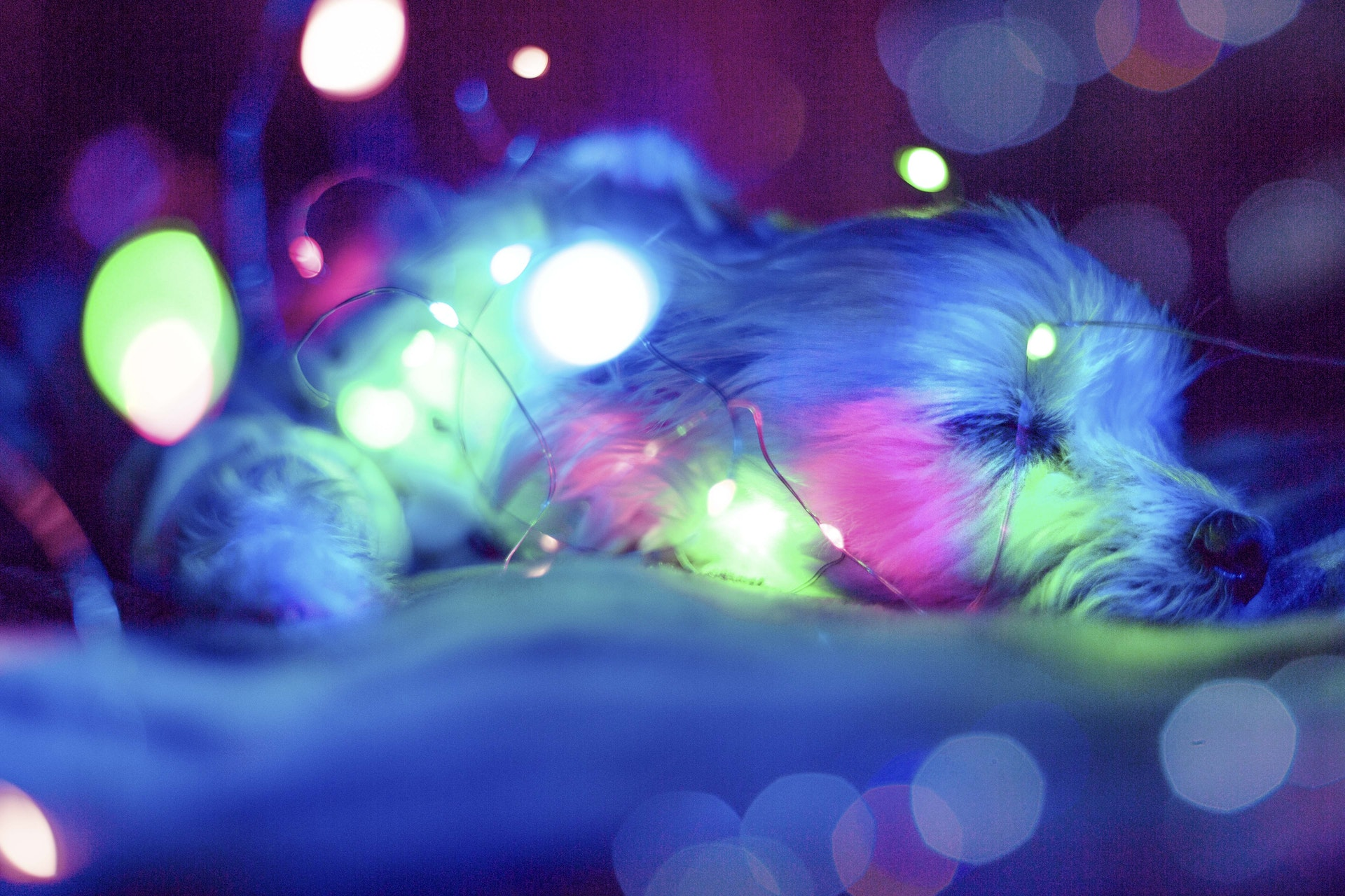 download wallpaper: slapende hond met neonlichtjes wallpaper