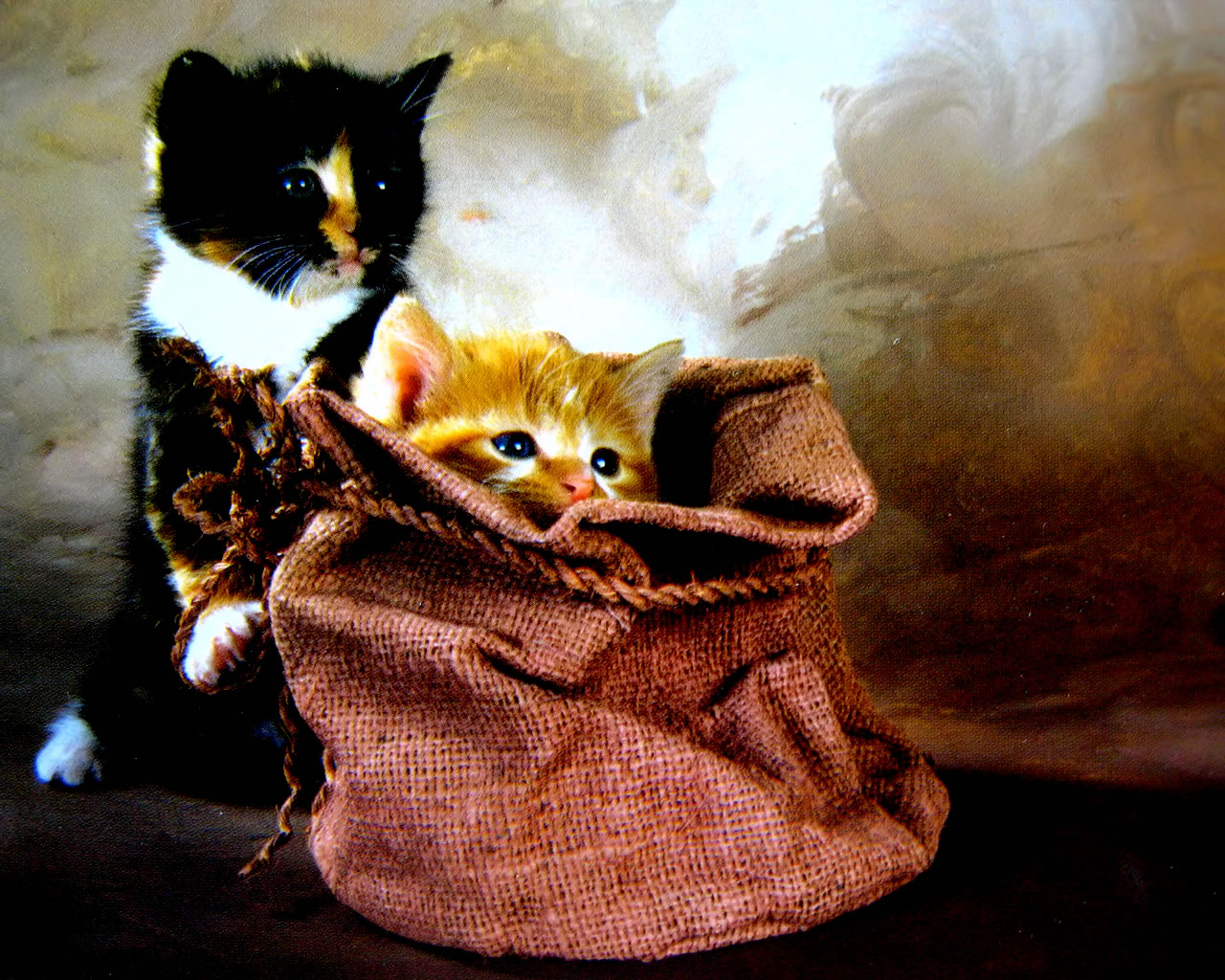 download wallpaper: twee kittens wallpaper