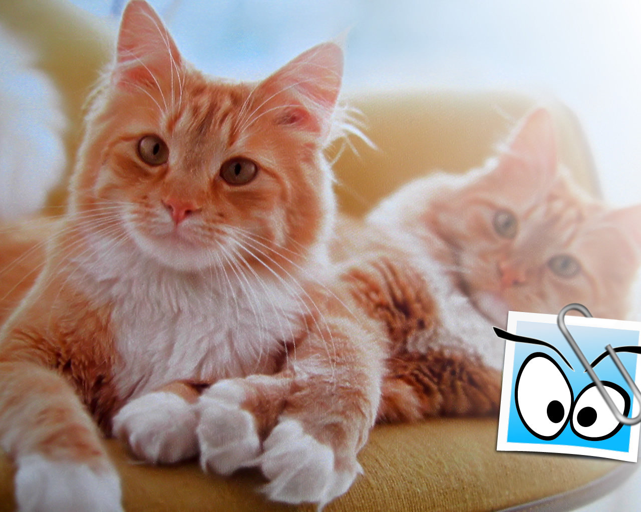download wallpaper: twee rode katten op de sofa wallpaper