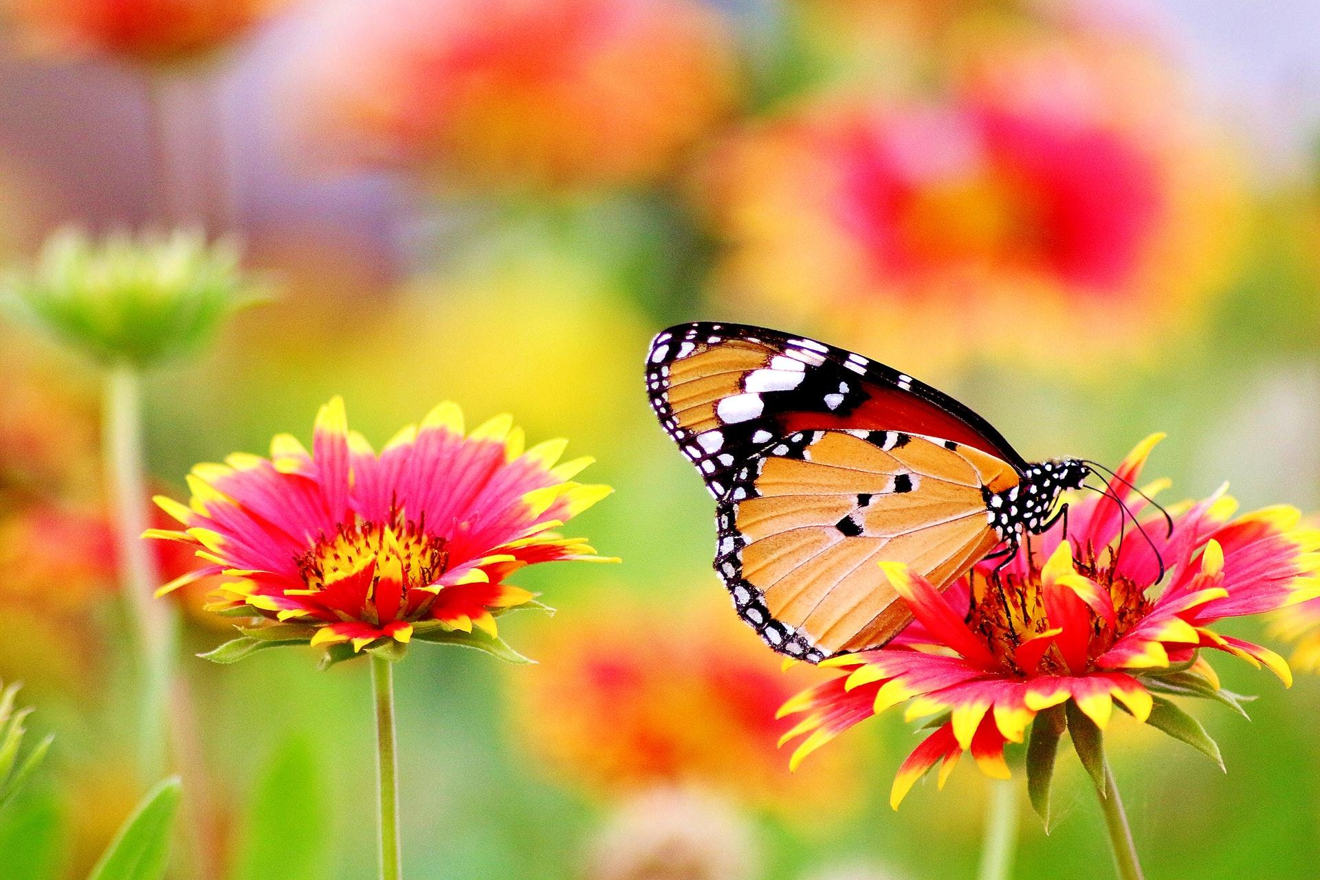 download wallpaper: vlinder tussen de bloemen wallpaper